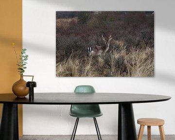 hert in het wild von Wesley Klijnstra