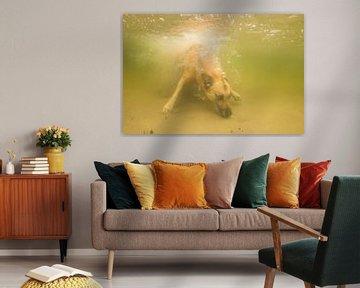 Mechelse herder onderwater van Annelies Cranendonk