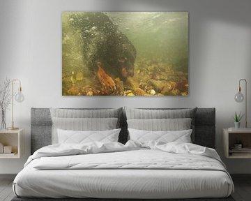 Rottweiler onderwater van Annelies Cranendonk