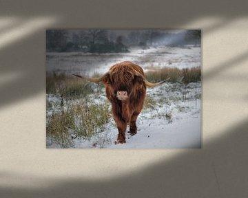 Schotse hooglander in de sneeuw van Laura Reedijk