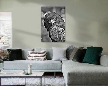 Roofvogel Zwart / Wit von DoDiLa Foto's