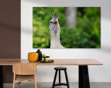 Kleurrijke en Fotogenieke Vogel von DoDiLa Foto's
