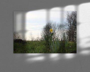 Eenzame narcis von Davey Simons