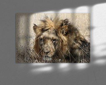 Afrikanischer Löwe von Geert Neukermans