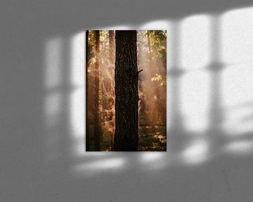 Atem des Waldes von Jakub Wencek
