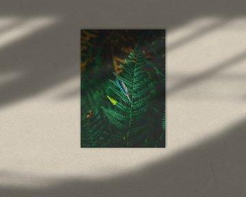 Lost feather van Jakub Wencek