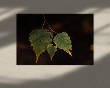 Trio van de Natuur von DoDiLa Foto's