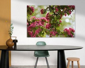 Roze Bloemenzee von DoDiLa Foto's