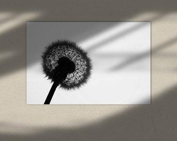 Paardenbloem silhouette von Hendrik Vingerhoet