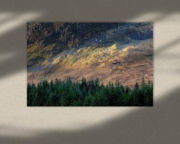 Herbstliche Farben in den schottischen Highlands beim Wandern auf dem West Highland Way im Herbst von Guido Boogert