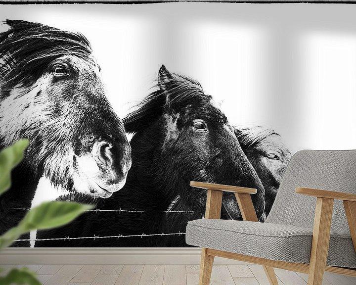Impression: Standa í röð sur Islandpferde    IJslandse paarden   Icelandic horses