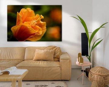 Oranje bloem op groen van Carine Belzon
