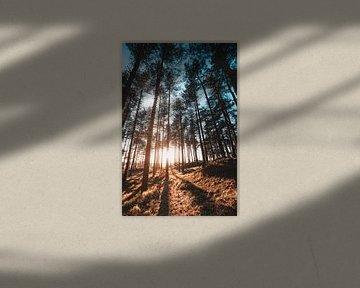 Oranjezon bos 1 van Andy Troy