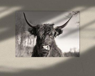 Portret Schotse Hooglander Zwart-Wit van Charlene van Koesveld