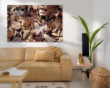 Herbstblatt Sonstiges von Berg Photostore