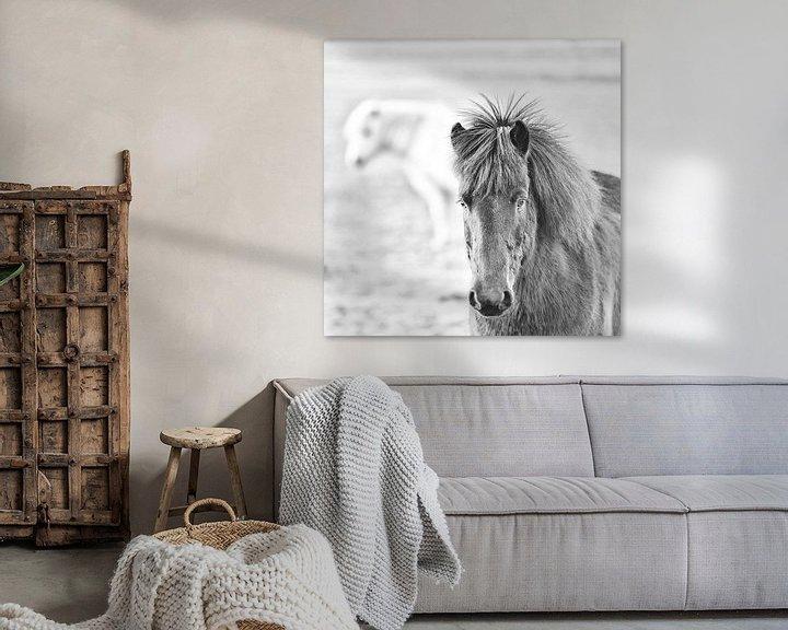 Impression: Thorsteinn sur Islandpferde  | IJslandse paarden | Icelandic horses