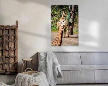 Giraffe van Jamy Danen