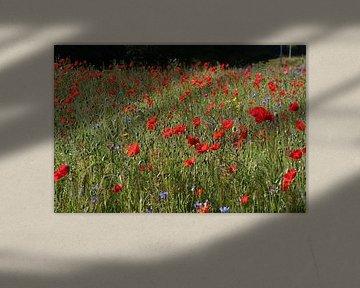 Feld voller roter Mohnblumen von Allerlei foto's