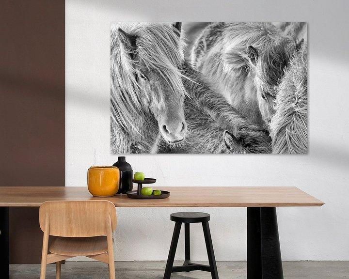Sfeerimpressie: Samheldni van Islandpferde  | IJslandse paarden | Icelandic horses