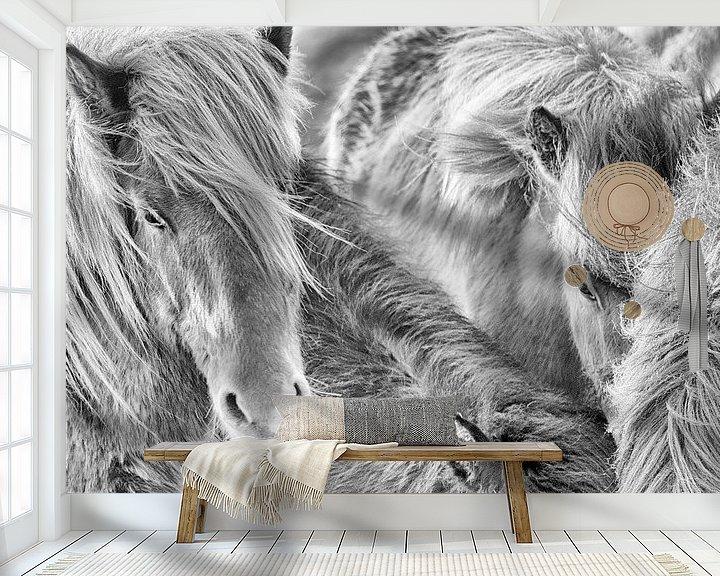 Sfeerimpressie behang: Samheldni van Islandpferde  | IJslandse paarden | Icelandic horses