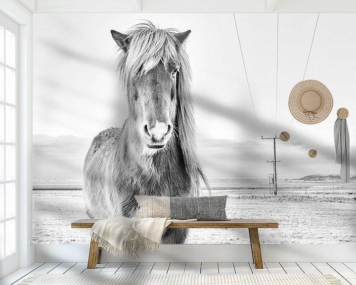Impression: Mánadís sur Islandpferde  | IJslandse paarden | Icelandic horses