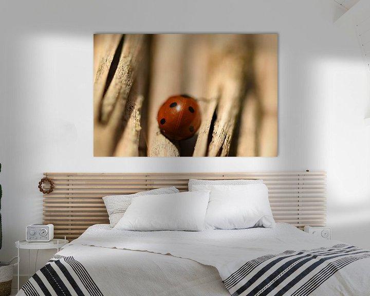 Sfeerimpressie: Lieveheersbeestje achterkant van Sascha van Dam