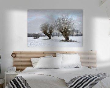 Old pollard willows ( Salix sp. ) on a frosty winter morning van wunderbare Erde