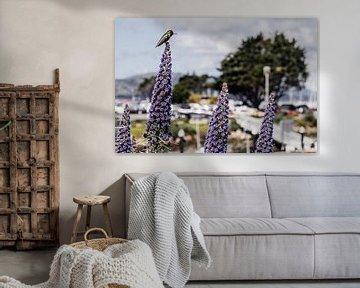 honeybird landscape van Jasper Verolme