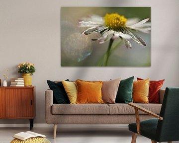 Madeliefje in bloei van Marjo Snellenburg
