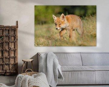 """Vos - """"Little Fox on the Move"""" von Carla Boogaard"""