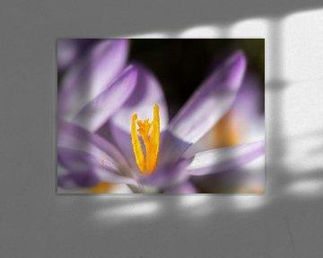 Yellow and purple van Lex Schulte