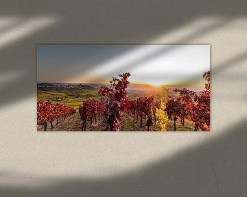 Wijngaarden bij Stuttgart in het najaar van Werner Dieterich