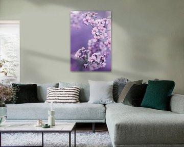 Achillea Millefolium van Sandor Ploegman-Stam
