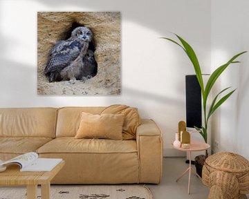 Europaeische Uhus ( Bubo bubo ), zwei Jungvögel nebeneinander am Eingang zu ihrer Nisthöhle von wunderbare Erde