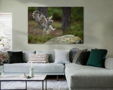 Tawny Owl ( Strix aluco ) in flight, flying, just before landing van wunderbare Erde
