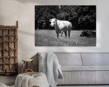 Kühe von André Dorst