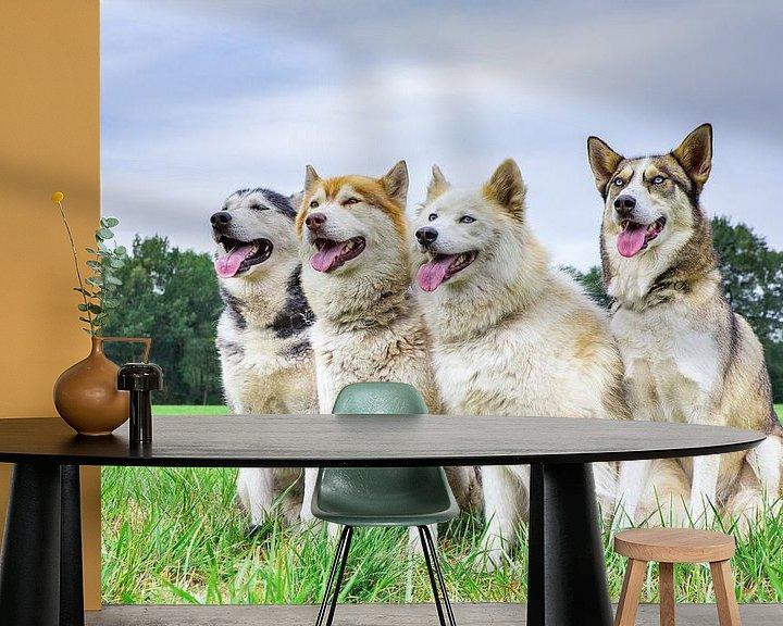 Sfeerimpressie behang: Vier huskies of poolhonden zitten op een rij in natuur van Ben Schonewille