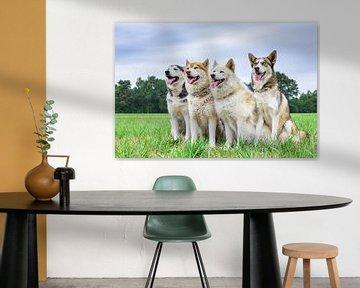 Vier Schlittenhunde sitzen auf grüner Wiese nebeneinander von Ben Schonewille