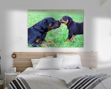 Welpenrottweiler leckt großen Hund draußen in der Wiese von Ben Schonewille