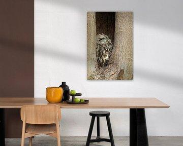 Waldkauz ( Strix aluco ) in seiner Baumhöhle, Nisthöhle von wunderbare Erde