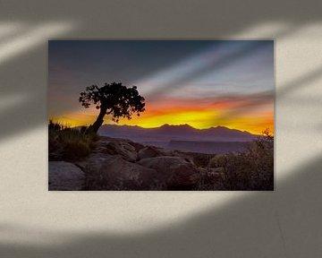 Conifère solitaire au lever du soleil dans le Utah sur Jonathan Vandevoorde
