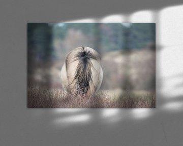 staart Konikpaard