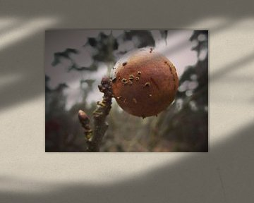 Sphere von Charlotte Koopman