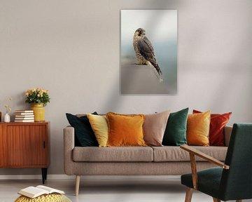 Wanderfalke ( Falco peregrinus ) sitzt hoch über der Landschaft auf dem Rand eines Gebäudedaches von wunderbare Erde