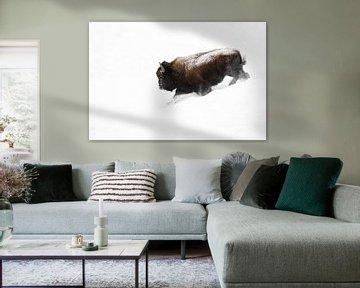 Amerikanischer Bison ( Bison bison ), Bisonbulle läuft, stürmt durch Tiefschnee einen Abhang hinab,  von wunderbare Erde