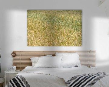 Die Farben des Sommers, leuchtend gelbe Weizenähren stehen dicht an dicht auf einem Feld sur wunderbare Erde