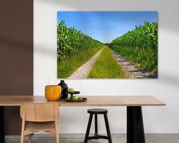 Maisvelden gescheiden door een rechte zandweg van Ben Schonewille
