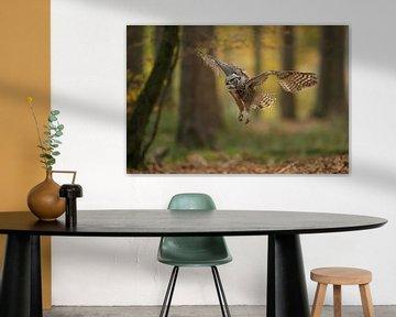Virginia-Uhu ( Bubo virginianus ), amerikanische Eule im Flug durch einen herbstlichen Wald von wunderbare Erde
