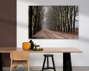 Prachtige pad met bomen von Cilia Brandts