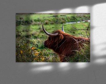 Relax - Schotse Hooglander op Texel van Texel360Fotografie Richard Heerschap